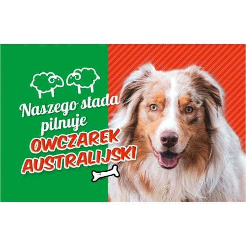 Owczarek australijski