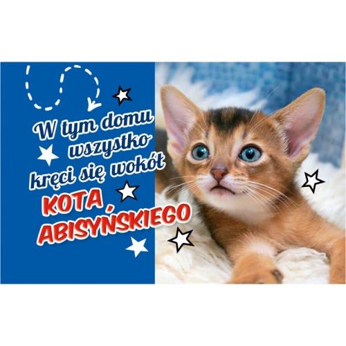 Abisyński kot